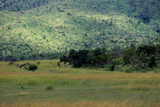 Fototapeta Sawanna - Sawanna w parku narodowym Pilanesber w Republice Południowej Afryki © andrzej_67