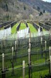 Vingård Αμπέλι Vườn nho Виноградник Weinberg Vineyard مزرعة Vigneto كرم Viinitila Winnica Vigna Viña Vinograd Viñedo כרם