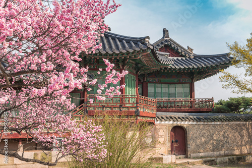 Poster Spring Cherry Blossom at Changdeokgung Palace, Seoul, South Korea