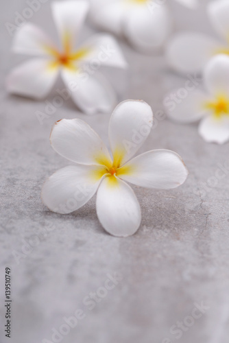 Plexiglas Spa Spa still with frangipani on grey background.