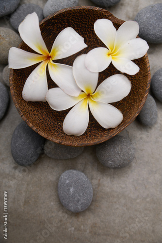 Plexiglas Spa Three frangipani in wooden bowl with spa stones on grey background.