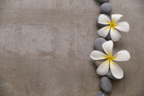 Spa stone with two frangipani on grey background.