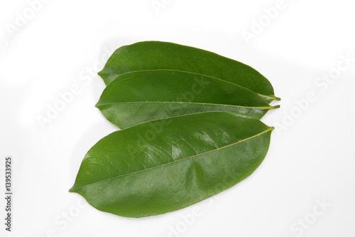 feuilles de corossol