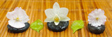 Fototapety Zen mit blüten und Steine in Reihe