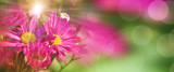 Colorful flowers in spring - 139549791