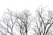 Dead branches , Silhouette dead tree or dry tree on white background with clipping path.