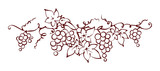 Design elements -- vine / Graphic vector illustration, grapes drawing sketch