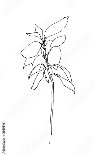 Outline herb hand drawn vector. Sketch style.