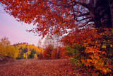 beautiful autumn trees