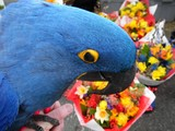 Still Life With Blue Parrot