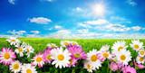 Fototapety Blumen, grüne Wiese und blauer Himmel mit strahlender Sonne