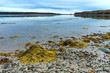 Shoreline at low tide on the coast of Maine.