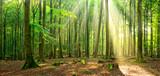 Unberührter naturnaher sonniger Laubwald, Sonnenstrahlen dringen durch Nebel - 139712103