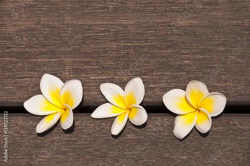 Three plumeria flower on wooden floor background