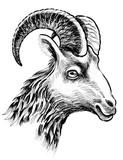 Goat head drawing - 139731368