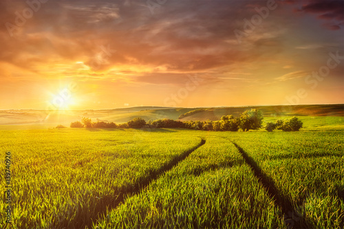 Poster Sunset in field
