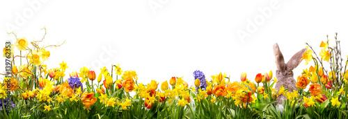 Ostern - Panorama - Wiese mit Blumen und Osterhase - 139762353
