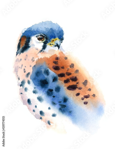 Watercolor American Kestrel Hand Painted Wild Bird Illustration isolated on white background - 139774513