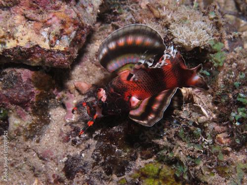 Foto op Plexiglas Zanzibar Two Eyed Lionfish