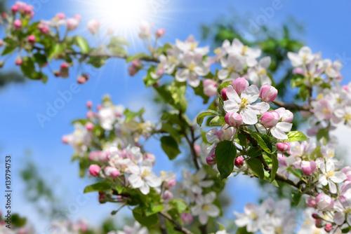Frühling 114