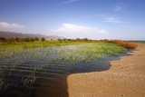 Blossoming marsh in the steppes of Kazakhstan