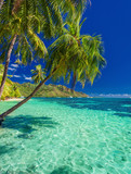 Beach with palm trees on the north side of tropical Moorea island