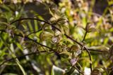 Fototapety Orchidee