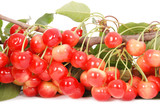 The branch of cherries with berries