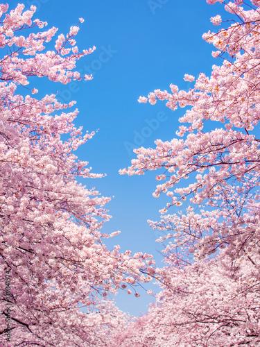 Deurstickers Lichtroze Rosa Kirschblüte im Frühling als Hintergrund