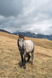 Gray horse in the mountains on the pasture