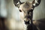 Portrait of deer in wildlife