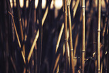 Bamboo background during sunset