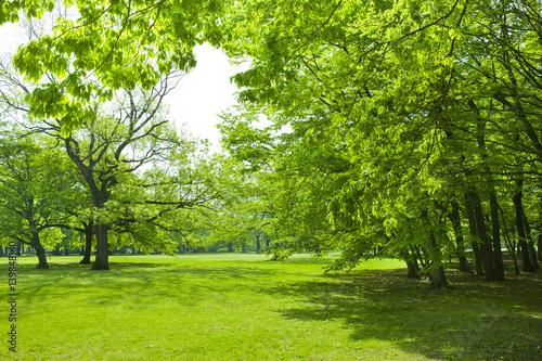 Foto op Canvas Pistache 公園 新緑