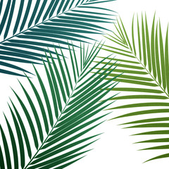 Palm leaves background. Vector exotic palm leaves