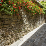 flowers on the old wall in tuscany city
