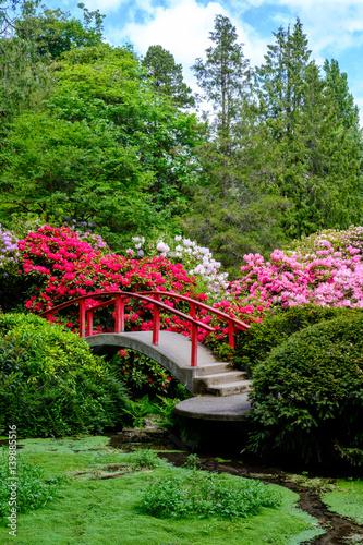 Obraz Japanese garden in spring