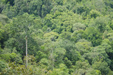 view of tropical forest landscape