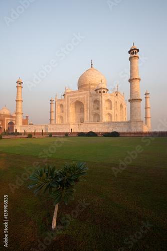 Grass and Tree at Taj Mahal at Morning Sunrise Reflecting Off Marble, Nobody Present