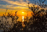 Golden sunset over sea in Greece coast through tree branches