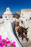 "donkeys and mules that work as tourist ""taxis"" on the island of Santorini, Cyclades, Greece."