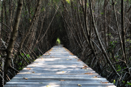 Fototapeta Tree tunnel, Wooden Bridge In Mangrove Forest at Laem Phak Bia, Phetchaburi, Thailand