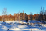 landscape in the winter forest
