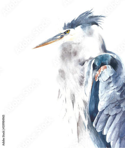 Blue heron bird portrait watercolor painting illustration isolated on white background - 139984965