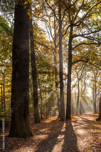 Keuken foto achterwand Antwerpen Belgium, Antwerp, middelheim park in autumn - fall