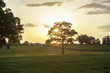 Thoroughbred horse farm at sunset, Ocala, Florida.