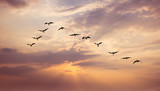Birds at sunrise or sunset nature concept - 140060957