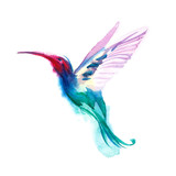 Watercolor blue humming-bird flying and  isolated on white background. rainbow bird. tropical colibri or white-throat