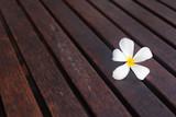 Pretty white frangipani flower on wood floor.