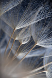 Abstract macro photo of plant seeds - 140101779