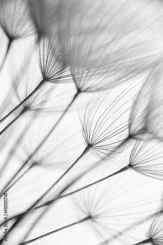 canvas print picture Abstract macro photo of plant seeds. Black and white